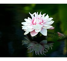 Water Lilies Reflections Photographic Print