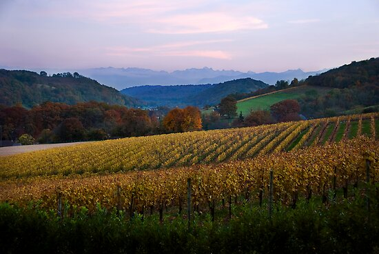 Vineyard in the Pyrenees by Alison Cornford-Matheson