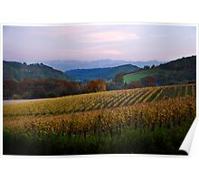 Vineyard in the Pyrenees Poster
