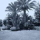 Hurghada Garden by jeanemm