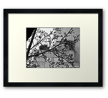 Autumn in Buenos Aires Framed Print