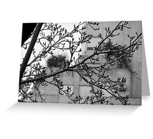 Autumn in Buenos Aires Greeting Card