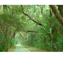 Allee of Oaks Photographic Print