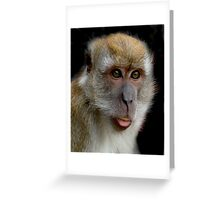 Macaque on Black Greeting Card