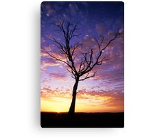 Waratah North Sunset Canvas Print