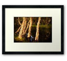 Melaleuca Magic Framed Print
