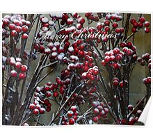 Merry Christmas - Snow covered Red Berries  Poster