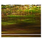 Forest at Speed by Peter Evans