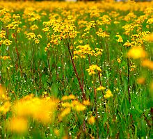 Yellow Flowers #3 by alliegator
