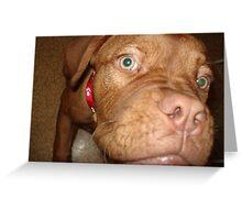 Dogue De Bordeux Greeting Card