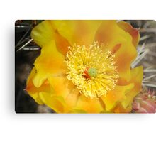 Plains Pricklypear Metal Print