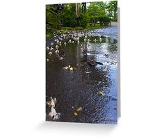 Fallen from the Rain Greeting Card