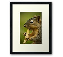 Squirrel Eating a French Fry Framed Print