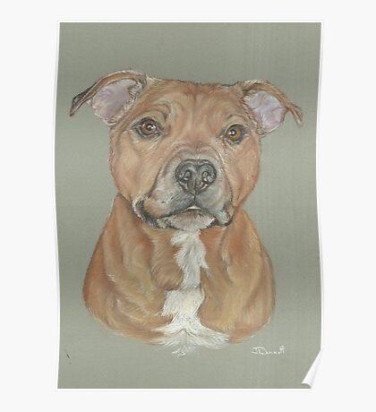 Terrier portrait in pastel Poster