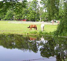 Horses in Berkshires 2 by Christine Frydenborg Dargon