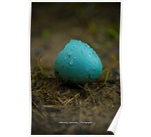 Hatched Robin's Egg Poster