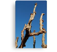 natural wood sculpture Canvas Print