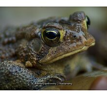 Toad in the Rain by BLaskowsky
