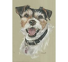 Terrier portrait Photographic Print