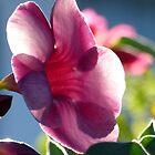 flower in the morning sun - flor en la luz de la mañana by Bernhard Matejka