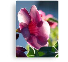 flower in the morning sun - flor en la luz de la mañana Canvas Print