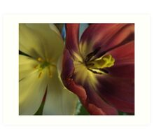 Tulips. Art Print