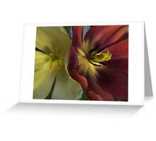 Tulips. Greeting Card