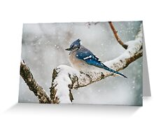 Blue Jay In Spring 3 Greeting Card