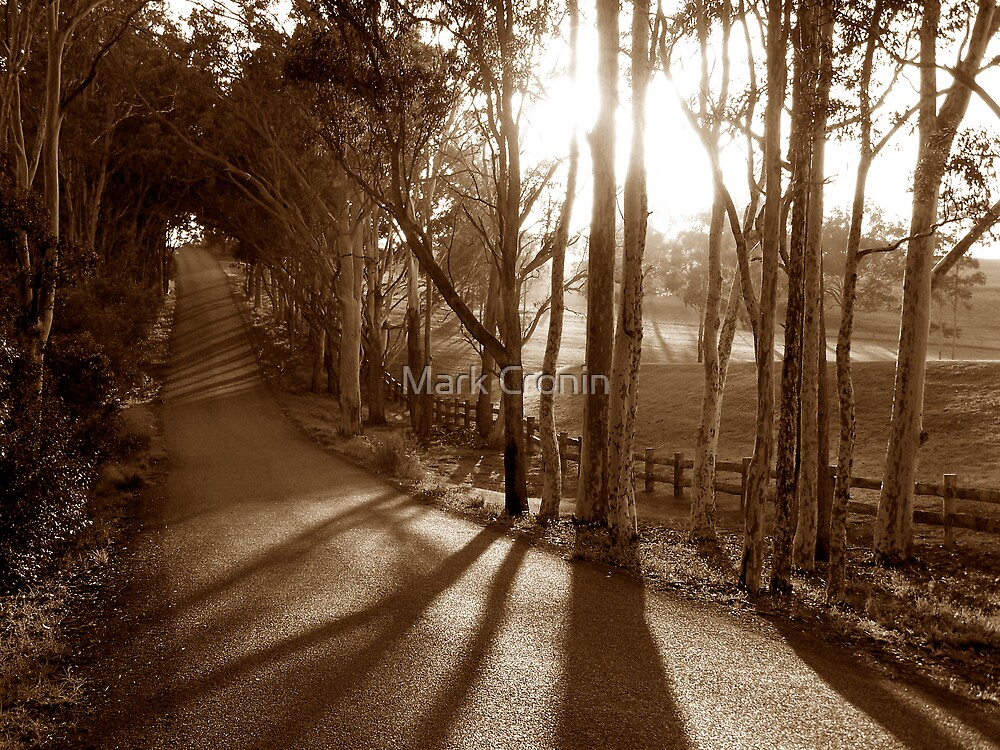 The Road Home by Mark Cronin