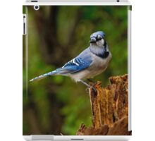 Blue Jay on Stump - Ottawa, Ontario iPad Case/Skin