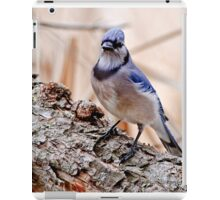 Blue Jay on Log - Ottawa, Ontario iPad Case/Skin