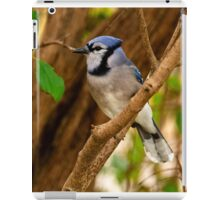 Blue Jay in Shrub - Ottawa, Ontario iPad Case/Skin