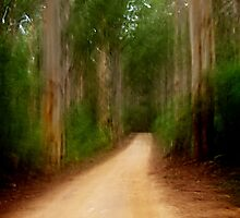 Forestry Road by Peter Evans