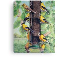 Finch Cuisine  Canvas Print