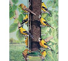 Finch Cuisine  Photographic Print