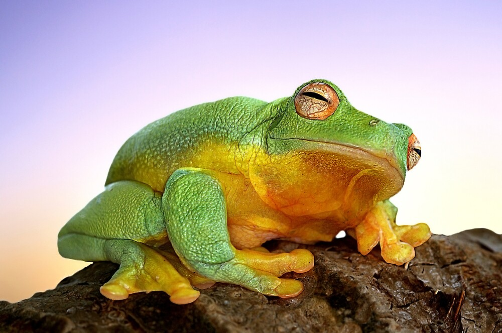 Sunrise Frog by Ken Boxsell