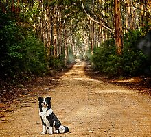 On the Road to.......? by Peter Evans