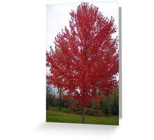 Crimson Tree Greeting Card