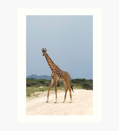 giraffe crossroads Art Print