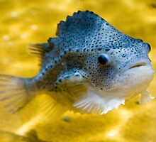 Small Fish with yellow background by John Stewart