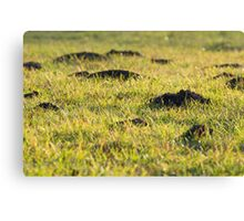 Mole Hills in the Grass Canvas Print