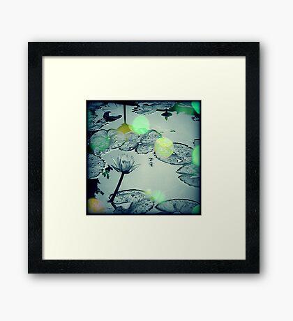 Dance of the Firefly Framed Print