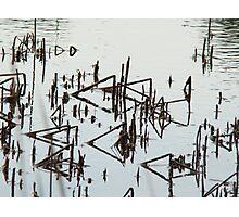 bent reeds Photographic Print