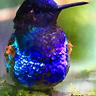 Costa's Hummingbird II by Bunny Clarke