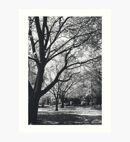 melbourne botanical Art Print