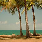 3 Palms by Chris Cohen