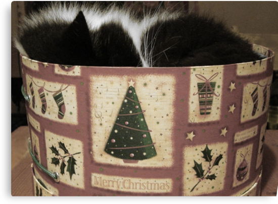 MERRY CHRISTMAS FROM THE CAT IN THE HAT (BOX) by May Lattanzio