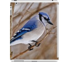 Blue Jay in Shrub iPad Case/Skin