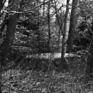 23.12.2014: Old, Abandoned Car in Forest by Petri Volanen