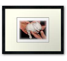 Gentle Hands Precious Bunny Framed Print